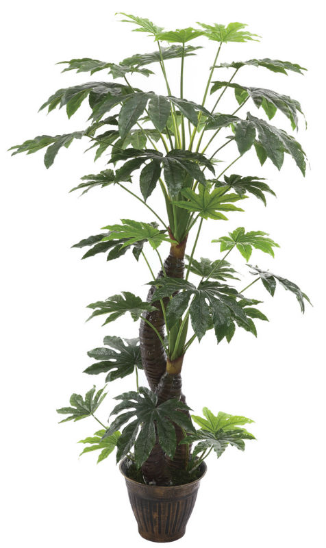 Cheap artificial trees dysosma veitchii fatsia japonica for Cheap trees