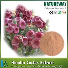 100% Natural Nopal Cactus Powder Botanical Source Opuntia dillenii Haw