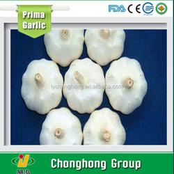 2015 Chinese normal white garlic