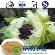 Snow Lotus extract 10:1 healthy supplement Snow Lotus flavonoids snow lotus extract powder