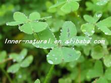 Natural Alfalfa Extract Saponin 40% HPLC