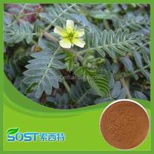 factory supply pure natural tribulus terrestris saponins