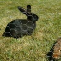 chicken coop anping hexagonal wire mesh wire cage rabbit cage