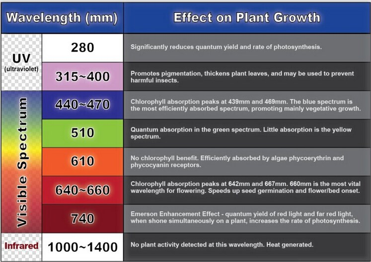 an analysis of the effects of various wavelengths on photosynthetic rate Various laser wavelengths in the effects and subgroup systematic review and meta-analysis of the effect of various laser wavelengths in.