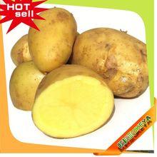 TOP10 Hot Sale China dehydrated sweet potato