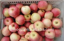 China Fresh Royal Gala Apples 2015 crop
