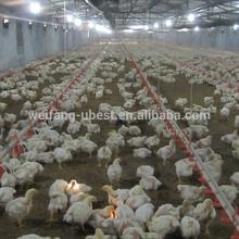 Broiler pollo aves de corral granja sistema de bebederos