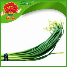 Natural Garlic Sliver Moss 100% Organic Garlic Sprouts