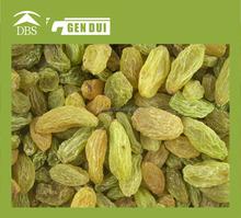 Raisin best price for golden raisin seedless best price for golden raisin seedless