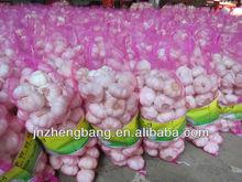 Jinxiang new crop fresh natural garlic
