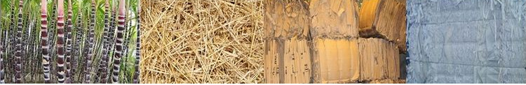 sugarcane pulp packaging