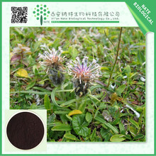 Hot selling Black Cohosh Extract 8% triterpene glycosides with nice price