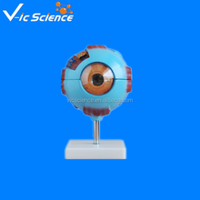 eye ball enlarge model 100% factory with best price