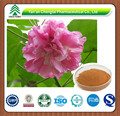 100% Natural Epigeal Srephaia Root P.E