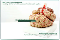 Товары для изучения медицины cmam] , 8 , CMAM-Brain 7
