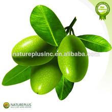 de oliva orgánico extracto de hoja de