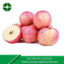 High Quality Delicious Fuji Apple in the Lowest Price for Export