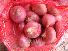 Round Shape and Liliaceous Vegetabless Product Type 50mm size red onion