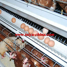 Taiyu 3 layer chicken cage (full poultry equipment and own oversea agent)