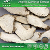 Top Quality Chinese angelica Root Extract Chinese angelica P.E. 20:1