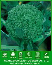 BR01 LJ no.1 60 days green hybrid broccoli seeds
