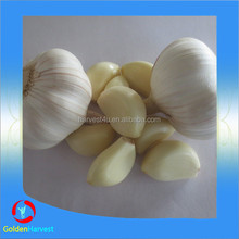 Garlic Price In China Garlic Exporters good quality