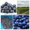 IQF frozen fruit prices and frozen blueberry