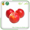 Fresh Plums for Sale Low Fresh Plum Price Beauty Product