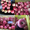 cap bagged qinguan apple fruits