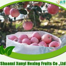 professionale fornitore di frutta cachi freschi frutti per la vendita