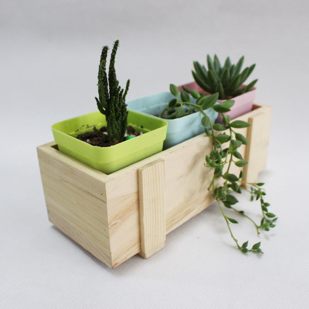 Pan hotsale solide bois plantes succulentes pot bac for Livraison fleurs paypal
