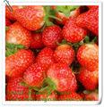Bajo costo jugo verde instantánea polvo de fruta