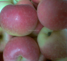 2015 new crop gala apple wholesale price from factory directly
