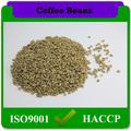 El precio de fábrica de yunnan de café arábica/en busca de café verde de frijol comprador