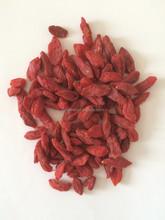 Chinese wolfberry Goji Berry
