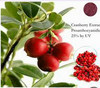 Natural colour plant very good effect natural hot sale cranberry extract
