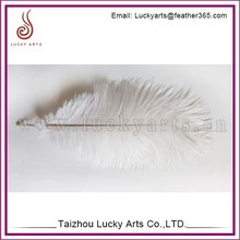 White Ostrich Feather for weeding Decor