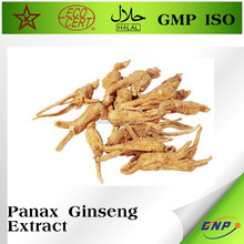 GMP&Kosher BNP 100% siberian panax ginseng extract