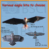 2014 Various hot sale easy flying eagle Kite