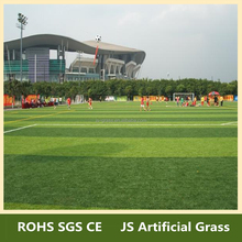 High quality best grass for lawn