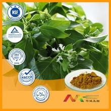 NSF-GMP Supplier provide health products Basil Extract powder