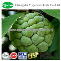 Graviola extracto de las hojas/graviola jugo en polvo/graviola extracto de jugo