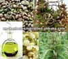 Cold Pressed Hemp Seed Oil For Health