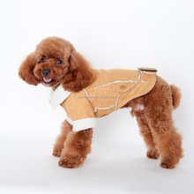 pet clothes dog