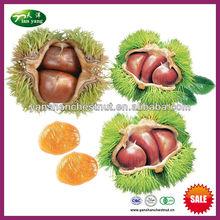 2013 nuevos cultivos orgánicos castaño chino fresco a granel frutossecos de yanshan moutains