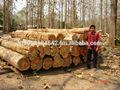 madera de teca de proveedores procedentes de tailandia