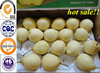 China Fresh Ya Pears 2015 new crop factory manufacturer supplier