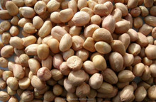 Dried Style all kinds of peanut Best offer