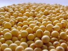 SOYBEAN SUPPLIER