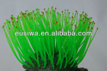 2013 vendita calda coralli acquario di corallo nero, eco- Amichevole coralli, corallo vivo